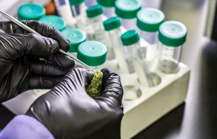 lab-testing-cannabis-thc-cbd